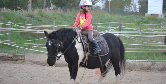 Cours baby-poney