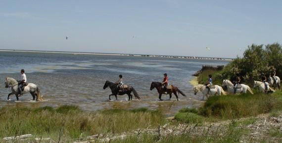 2 uur per paard de natuur verkennen in de etange